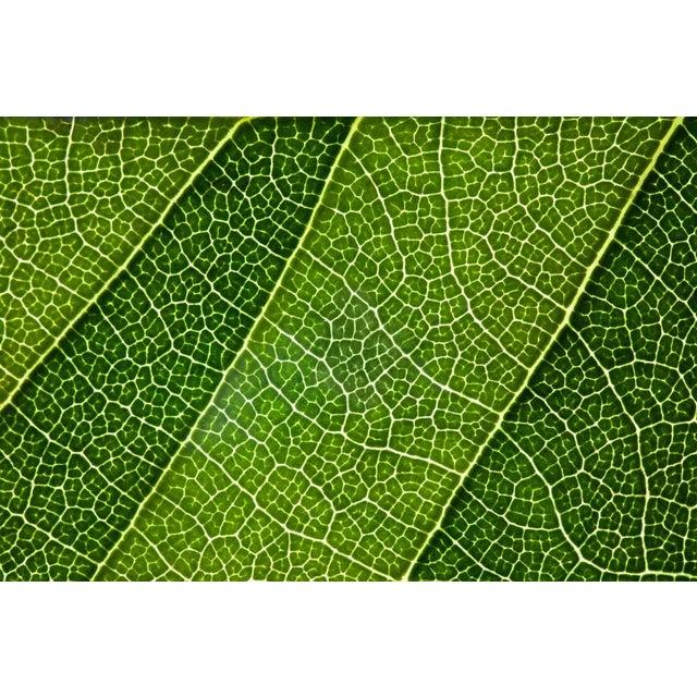 "Natalie Kinnear ""Leaf Lines III"" Framed Print - Image 2 of 2"