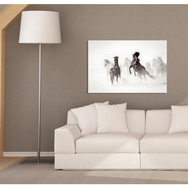 (2011) Limited Edition Photography: Wild Stallions, Great Divide Basin, Wyoming, USA. **THIS PRICE IS FOR PRINT ONLY, IN...