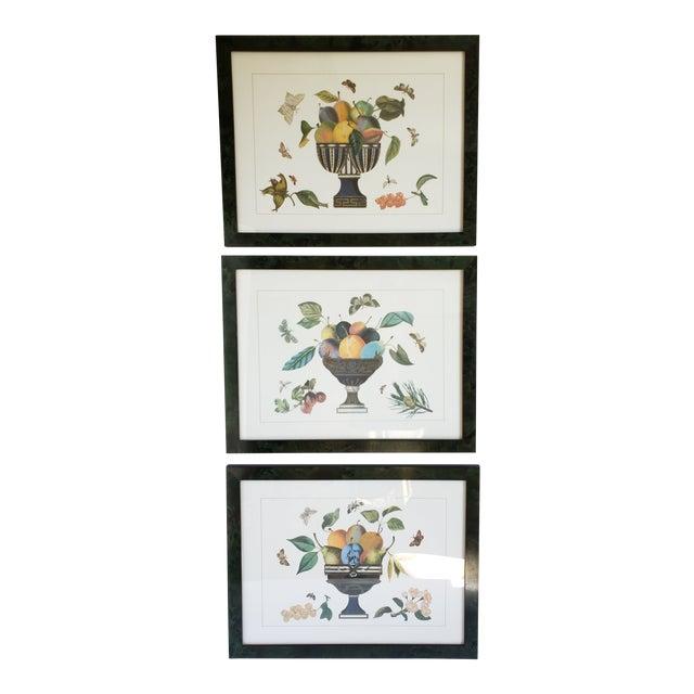 Decorative Butterfly Botanical Framed Prints-Set of 3 For Sale