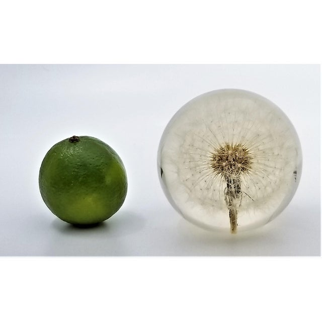 Mid-Century Modern Vintage Lucite Sculpture Paperweight of a Dry Dandelion For Sale - Image 3 of 12
