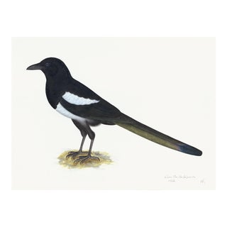 Magpie Plate 16 by Olof Rudbeck (Cfa-Wd) For Sale