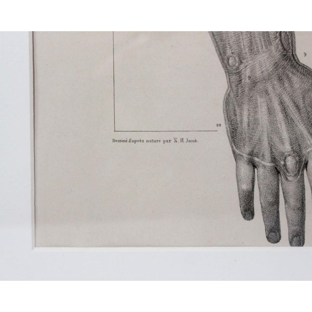 Victorian 189 Year Old French Anatomy Muscular Arm Study Lithographic Prints - Framed For Sale - Image 3 of 4