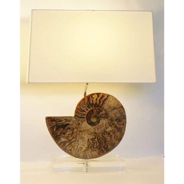 Ammonite Fossil Lamps - A Pair - Image 4 of 4