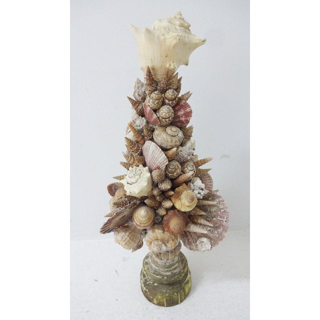 Nautical 18th Century Italian Nautical Shell Sculpture on Wooden Base For Sale - Image 3 of 9