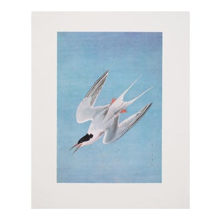 """1966 Large """"Roseate Tern"""" Lithograph by Audubon For Sale"""