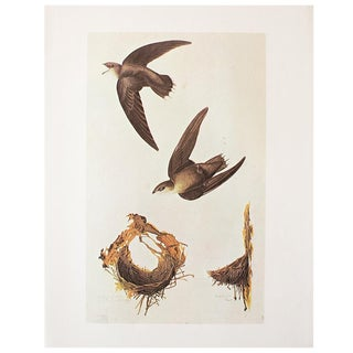 Chimney Swift by John James Audubon, 1966 Vintage Print For Sale