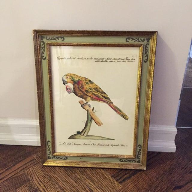 Bird Print Art - Set of 4 - Image 4 of 5