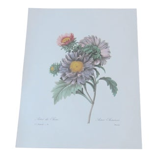 1970s Vintage French Floral Lithograph by Pierre Redoute For Sale