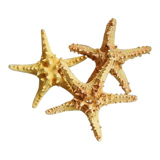 Vintage Large Tan/Gold Knobby Starfish - Set of 3