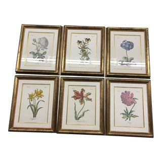 1990s Large Framed Botanical Prints - Set of 6 For Sale