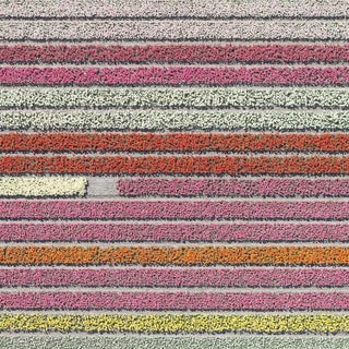 """""""AV_Tulip_Fileds_028"""" Contemporary Aerial View Limited Edition Photograph by Bernhard Lang For Sale"""