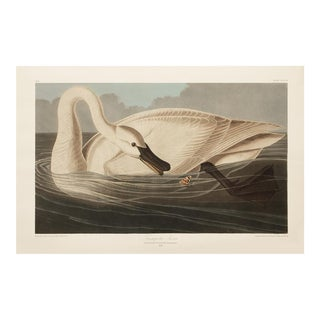 1990s Trumpeter Swan by Audubon, Large Cottage Style Print For Sale