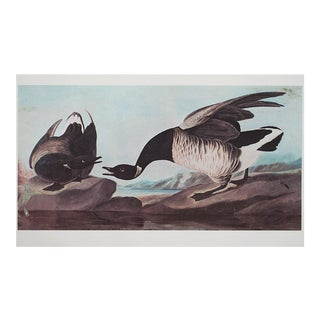 1960s Cottage Style Lithograph of a Brant Goose by John James Audubon