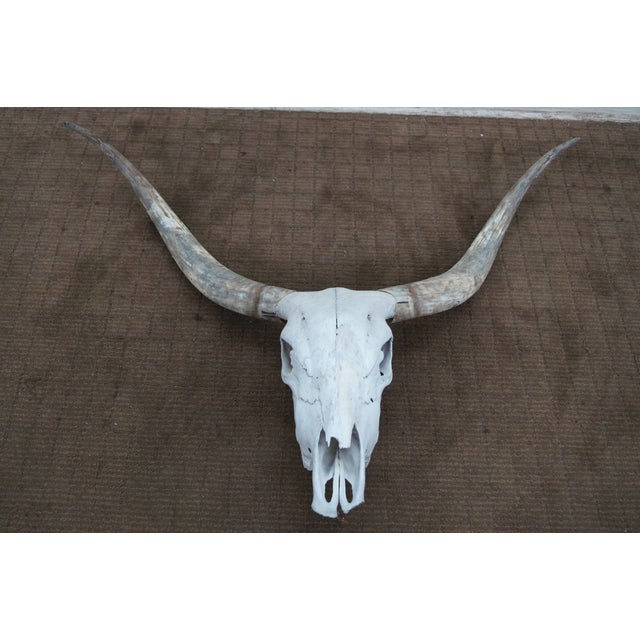 Genuine Texas Longhorn Natural Skull with Horns - Image 6 of 10