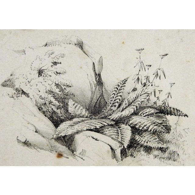 Circa 1900 Nature Study Lithograph - Image 2 of 3