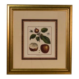 Framed Print of Apples For Sale