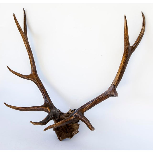 10-Point Elk Antlers - Image 3 of 4