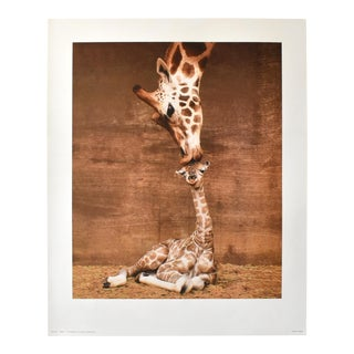 """Vintage Giraffe Photograph """"First Kiss"""" Poster Print For Sale"""