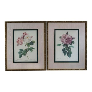 P. J. Redoute Botanic Rose Prints in Gold Gilt Ornate Frames - a Pair For Sale