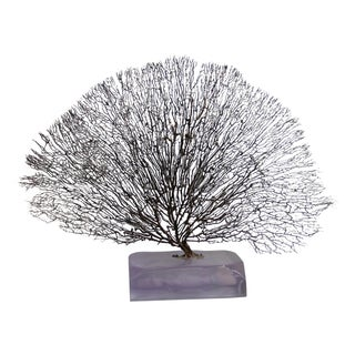 Sea Fan Centerpiece in Resin Base For Sale