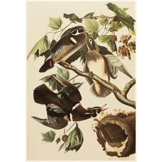 Rare Wood Ducks by John James Audubon, Vintage Corrage Print For Sale