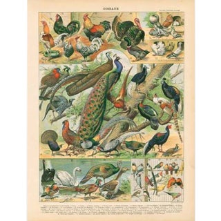 Vintage Peacocks & Friends Archival Print