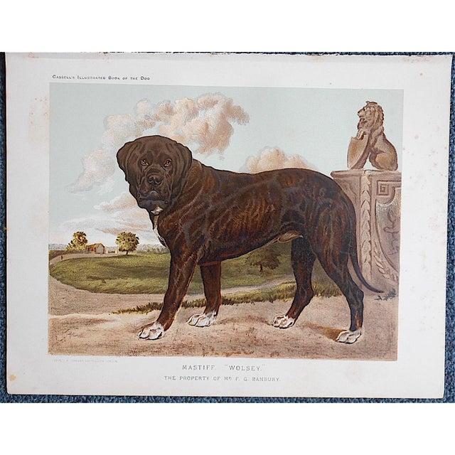 "Antique Dog Lithograph ""Mastiff"" - Image 2 of 3"