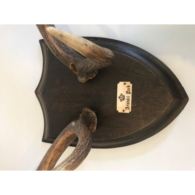 Red 19th Century Black Forest Red Stag Antlers Mounted on Shield Shaped Plaque For Sale - Image 8 of 13