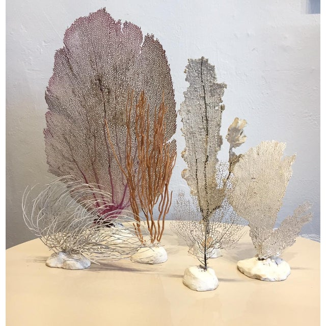 Vintage Grouping of Sea Fans - Set of 6 - Image 2 of 4
