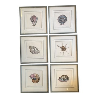 Gallery Wall Collection-6 Original Lithograph Nautical Shell Prints by Listed Artist Dan Mitra- Set of 6 For Sale