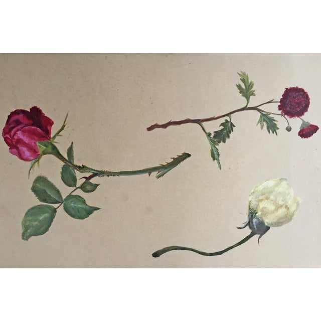 Antique Painting Botanical Study in Gouache - Image 1 of 4