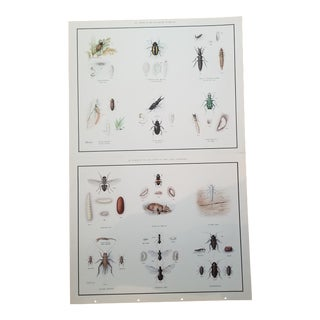 Vintage English School Moth Insect Poster - a Pair For Sale