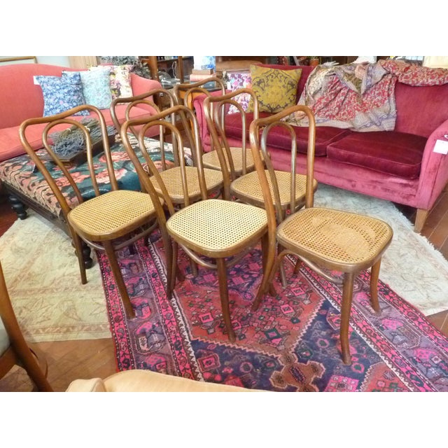 Vintage Bentwood and Cane Cafe Dining Chairs - Set of 6 For Sale - Image 5 of 10