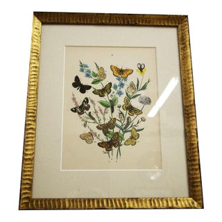 Custom Framed Vintage Butterfly Lithograph For Sale