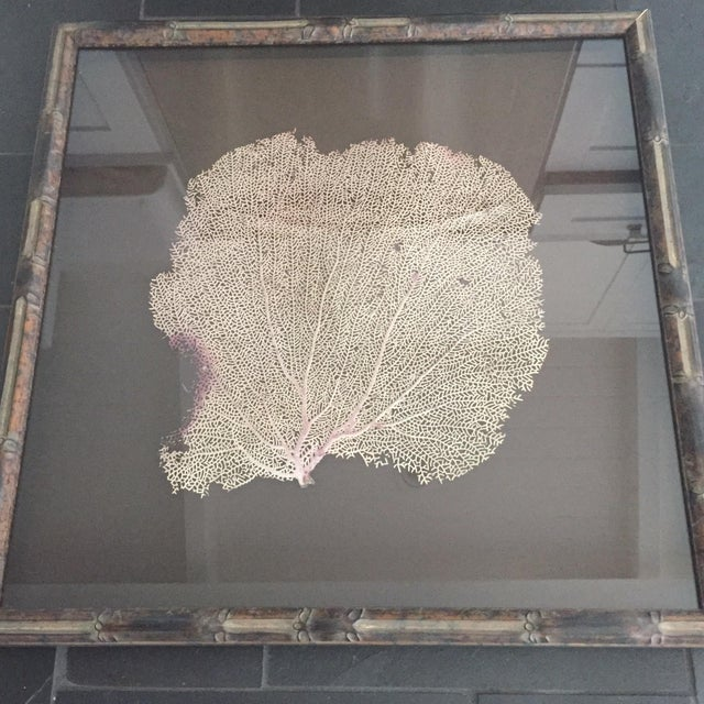 Coral Sea Fan in Bamboo Frame - Image 5 of 5