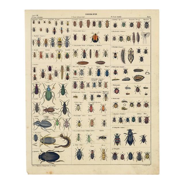 """Tierkaefer"" (Animal Beetles), Hand-Colored Steel Engraving Circa 1850 For Sale"