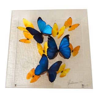 1990s Framed Butterfly Display For Sale