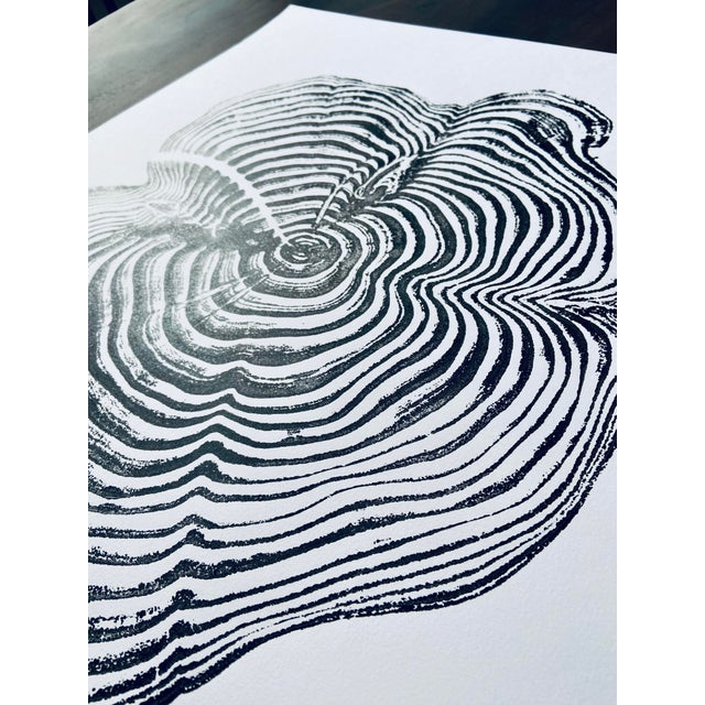 Tree ring print from Sequoia and Kings Canyon National Park, California. This tree ring print is made by hand from an...
