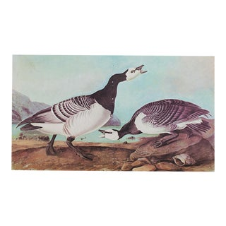 XL Vintage Lithograph of Barnacle Goose