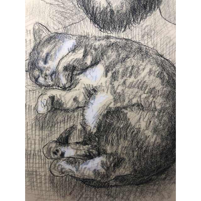 Self Portrait With Possum The Cat Drawing By James Bone