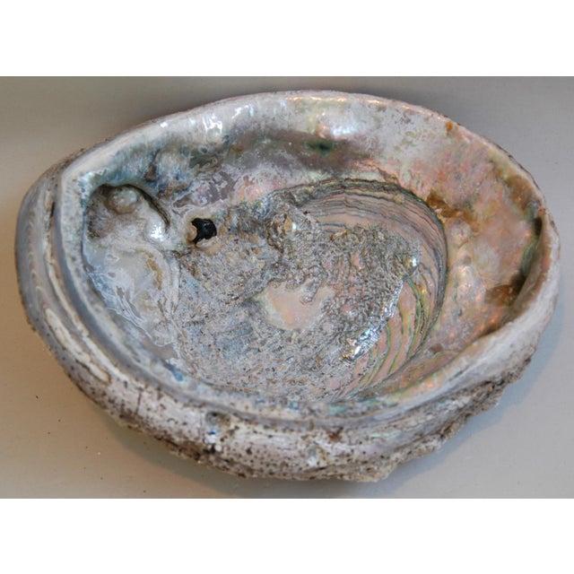 Natural Iridescent Abalone Seashells - a Pair - Image 4 of 6