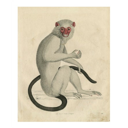 Vintage Monkey Archival Print - Image 2 of 5