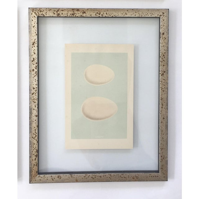 Framed Antique Morris Egg Prints - Set of 4 For Sale In Denver - Image 6 of 11