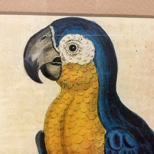 This is a beautifully framed lithograph from the mid 20th century. The piece depicts a blue macaw, styled after Eleazar...