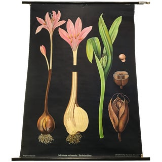 Mid-Century Botanical Educational Chart