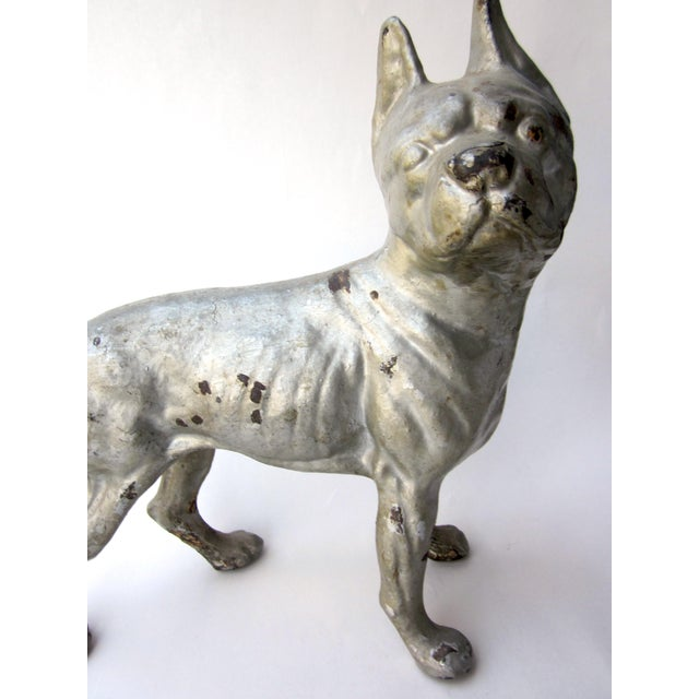 This is a great example of a c. 1930s collectible cast iron dog figure doorstop. It is a Boston Terrier dog, standing...