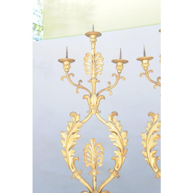 Early 19th Century Grand Pair of 19th Century Giltwood Porta Palma For Sale - Image 5 of 10