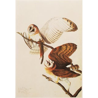 1966 Cottage Lithograph of Barn Owls by John James Audubon For Sale