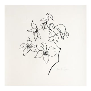 Original Clematis Drawing by Janet Fry Rogers