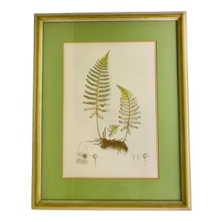 1960s Vintage Framed Botanical Print For Sale